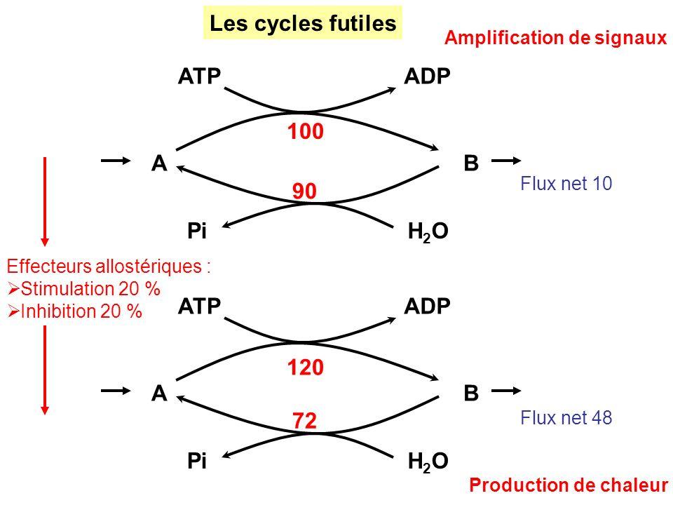 Les cycles futiles A B ATP ADP H2O Pi 100 90 A B ATP ADP H2O Pi 120 72