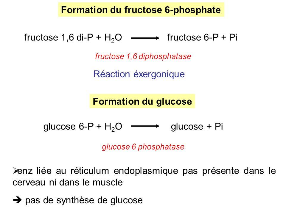 fructose 1,6 diphosphatase