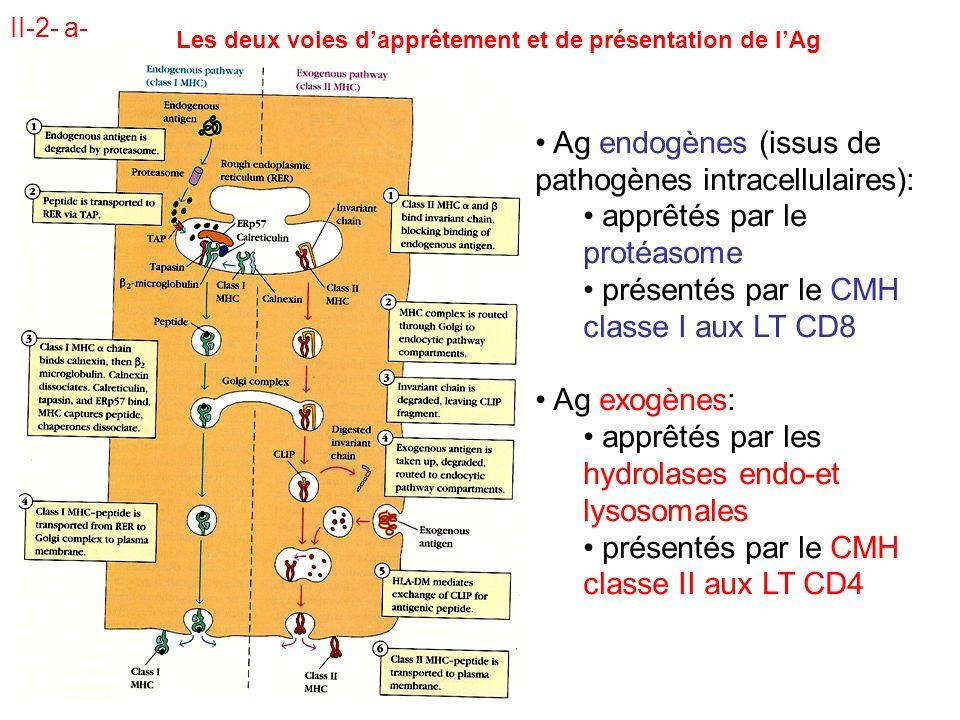 Les deux voies d'apprêtement et de présentation de l'Ag