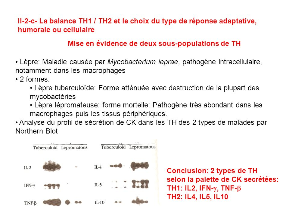 II-2-c- La balance TH1 / TH2 et le choix du type de réponse adaptative,