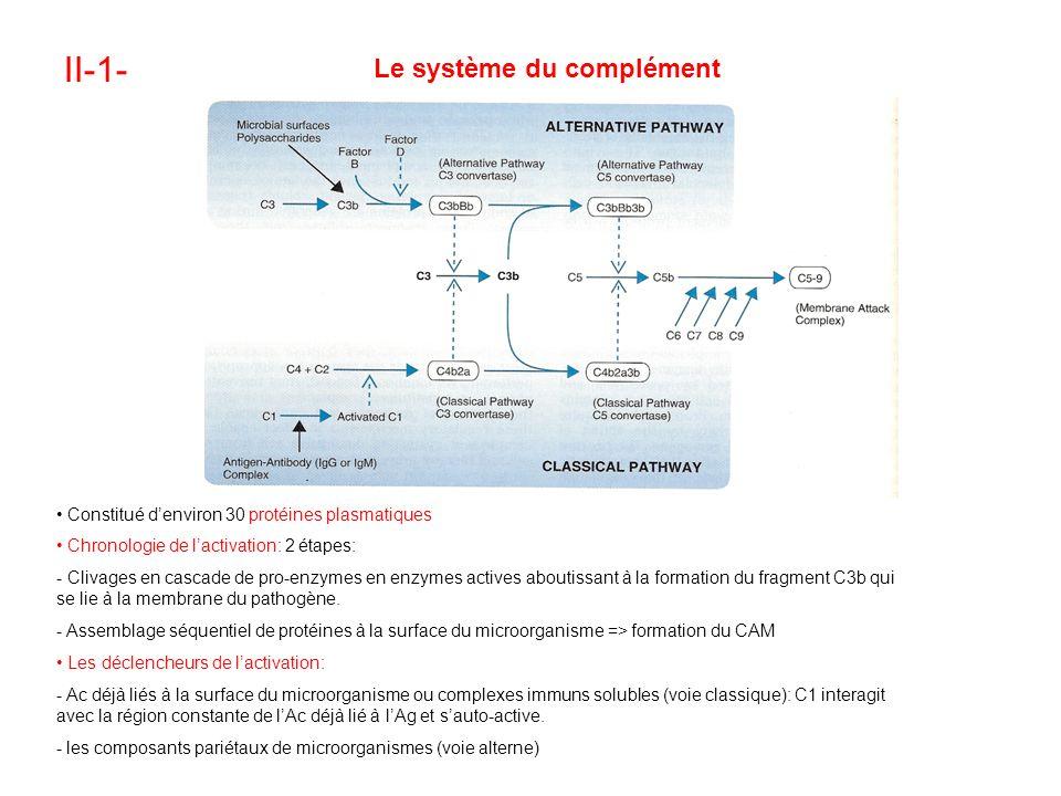 II-1- Le système du complément
