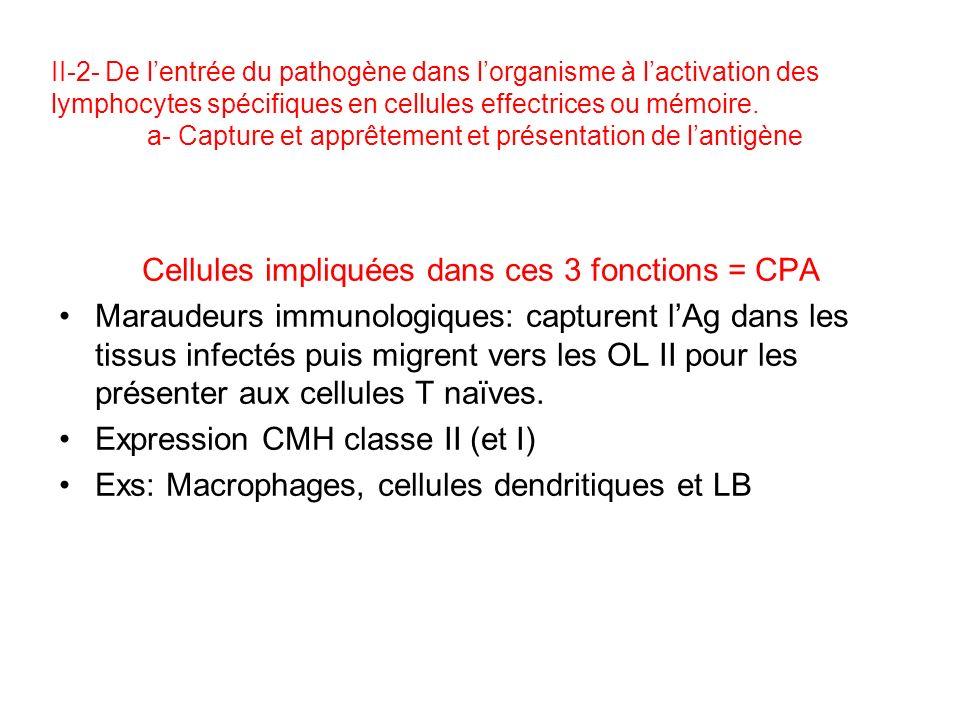Cellules impliquées dans ces 3 fonctions = CPA