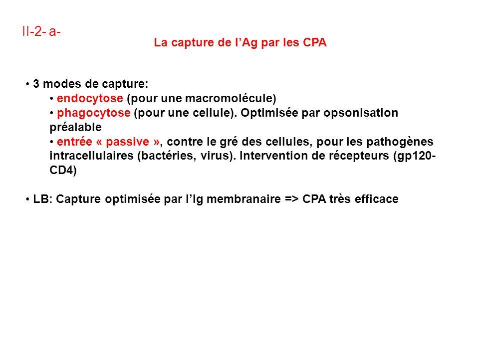 II-2- a- La capture de l'Ag par les CPA 3 modes de capture: