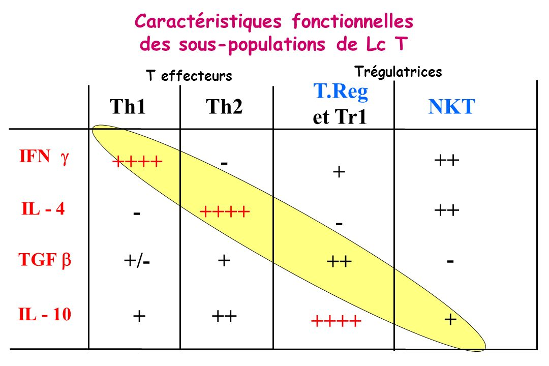 Caractéristiques fonctionnelles des sous-populations de Lc T