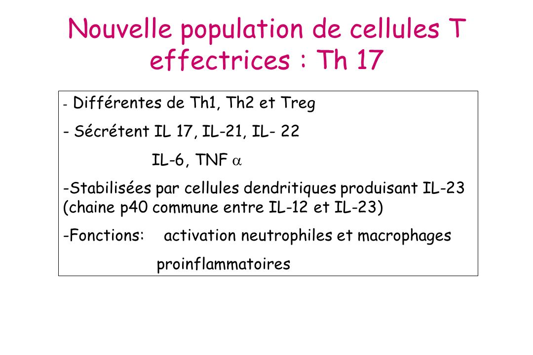 Nouvelle population de cellules T effectrices : Th 17