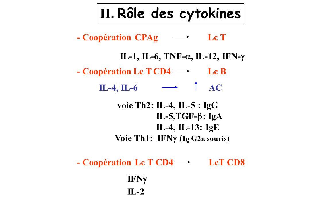 II. Rôle des cytokines - Coopération CPAg Lc T