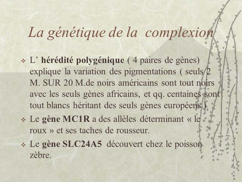 La génétique de la complexion