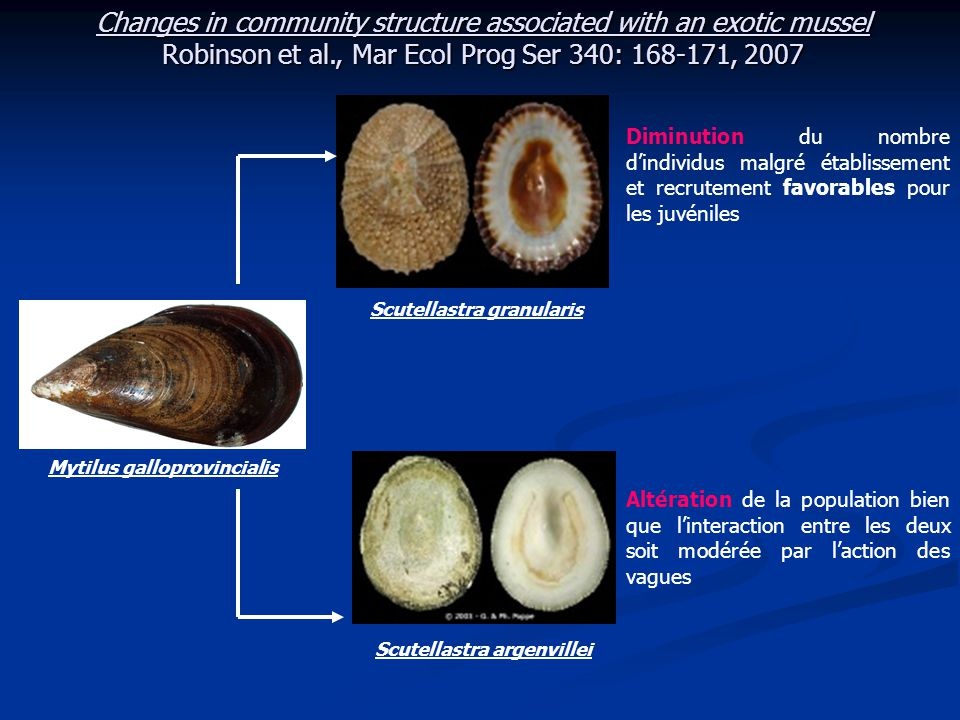 Changes in community structure associated with an exotic mussel Robinson et al., Mar Ecol Prog Ser 340: 168-171, 2007