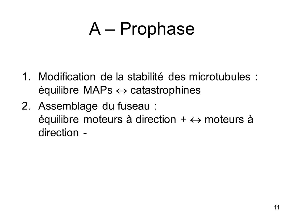 A – Prophase Modification de la stabilité des microtubules : équilibre MAPs  catastrophines.