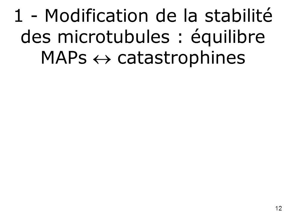 1 - Modification de la stabilité des microtubules : équilibre MAPs  catastrophines
