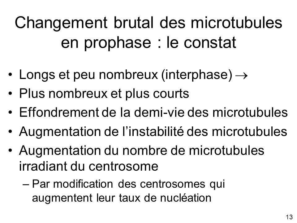 Changement brutal des microtubules en prophase : le constat
