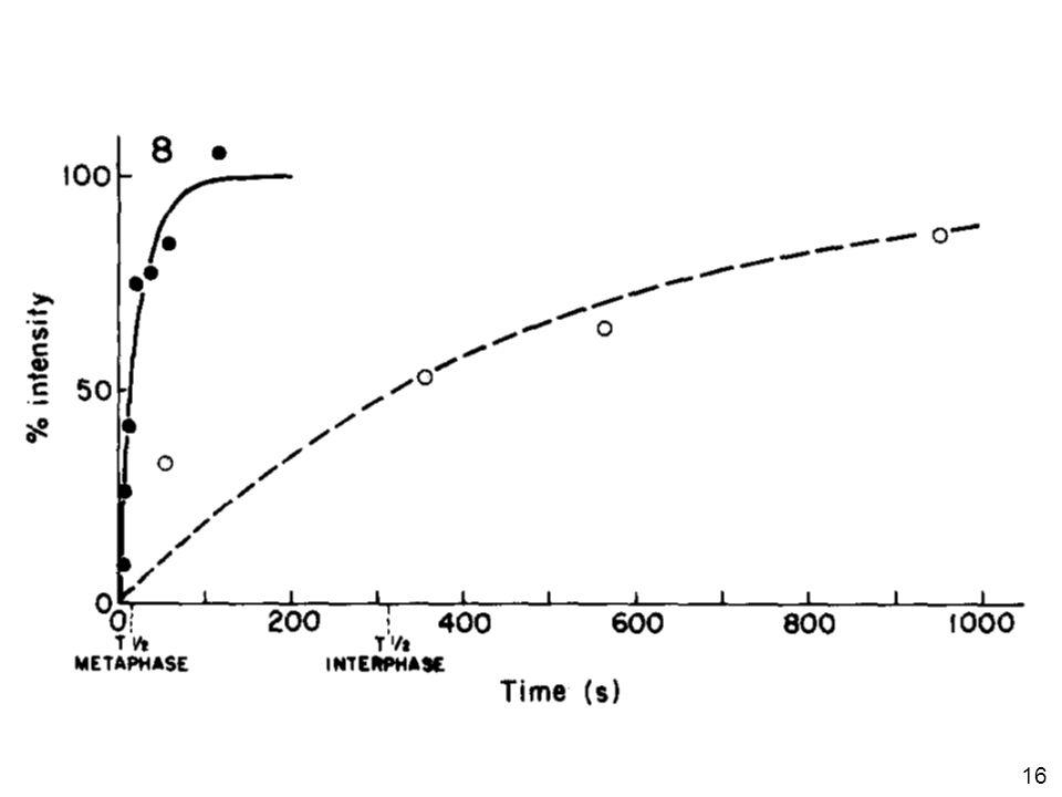 Saxton, WM J Cell Biol 99:2175, 1984 #1p1038