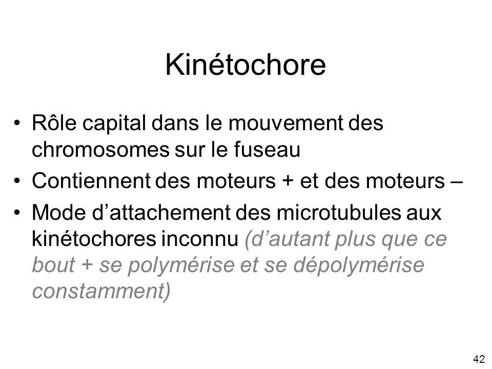 Mardi 29 janvier 2008 Kinétochore. Rôle capital dans le mouvement des chromosomes sur le fuseau. Contiennent des moteurs + et des moteurs –