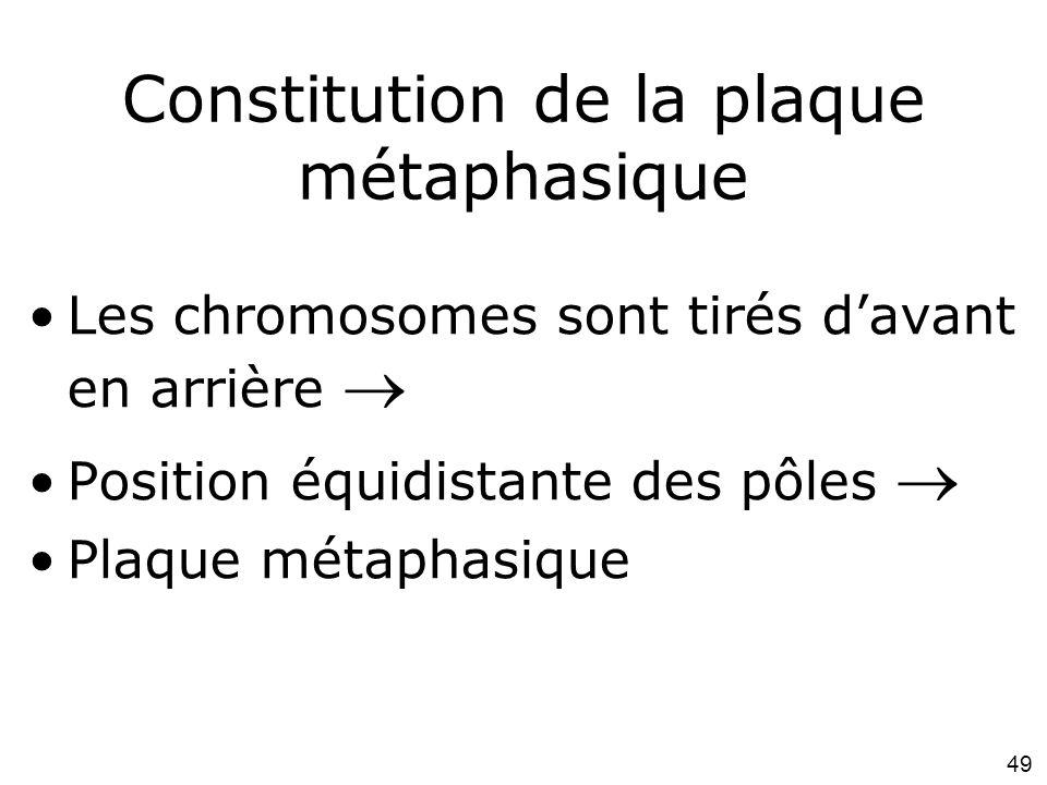Constitution de la plaque métaphasique