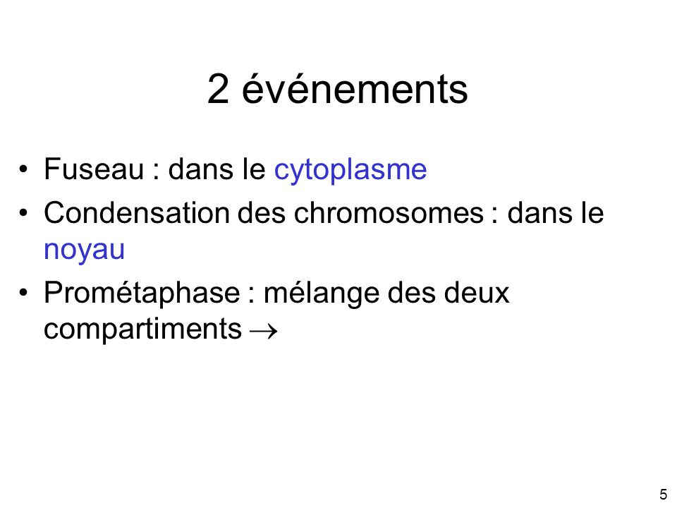 2 événements Fuseau : dans le cytoplasme