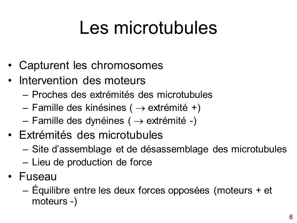 Les microtubules p1037 Capturent les chromosomes
