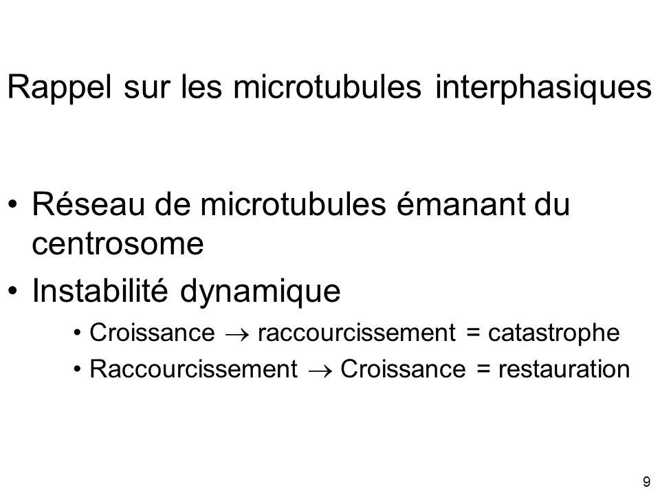 Rappel sur les microtubules interphasiques