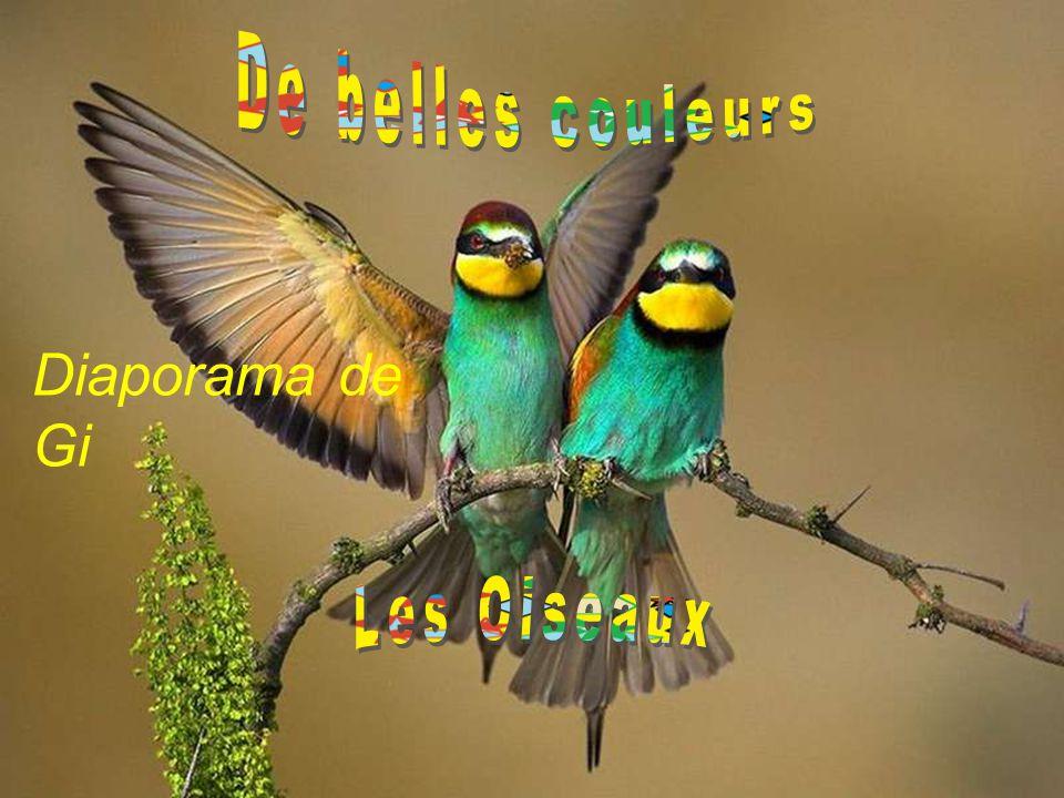 De belles couleurs Diaporama de Gi Les Oiseaux