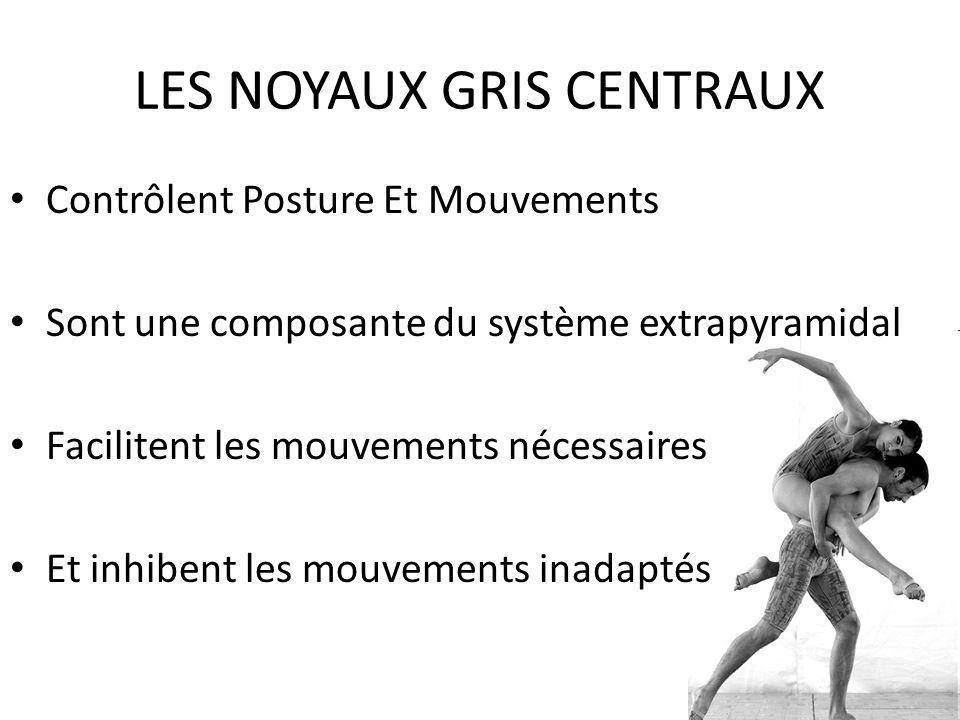 LES NOYAUX GRIS CENTRAUX