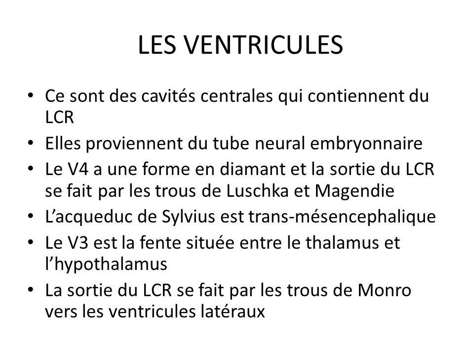 LES VENTRICULES Ce sont des cavités centrales qui contiennent du LCR