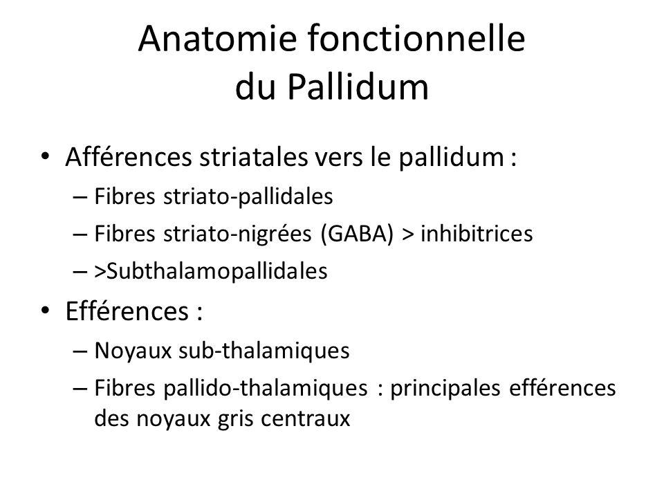 Anatomie fonctionnelle du Pallidum