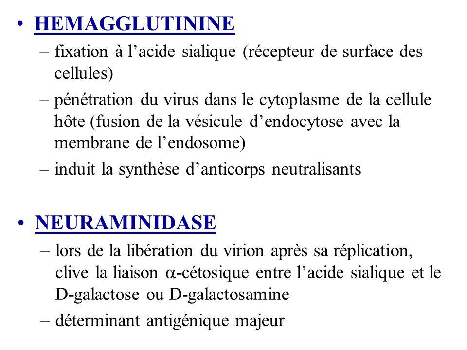 HEMAGGLUTININE NEURAMINIDASE