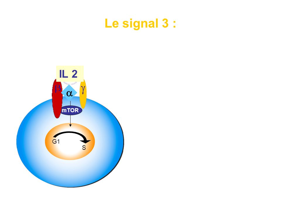 signal de progression du cycle cellulaire