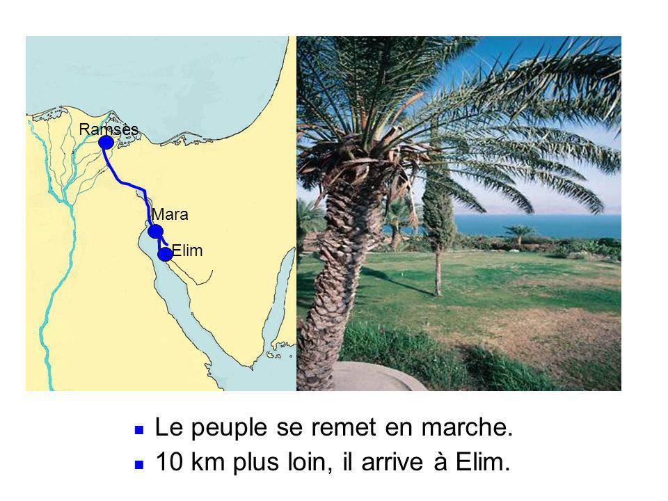 Le peuple se remet en marche. 10 km plus loin, il arrive à Elim.