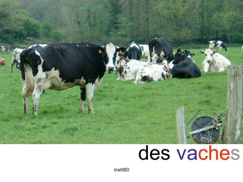 che vache des vaches instit90
