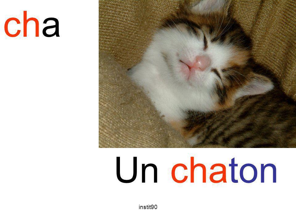 cha chaton Un chaton instit90