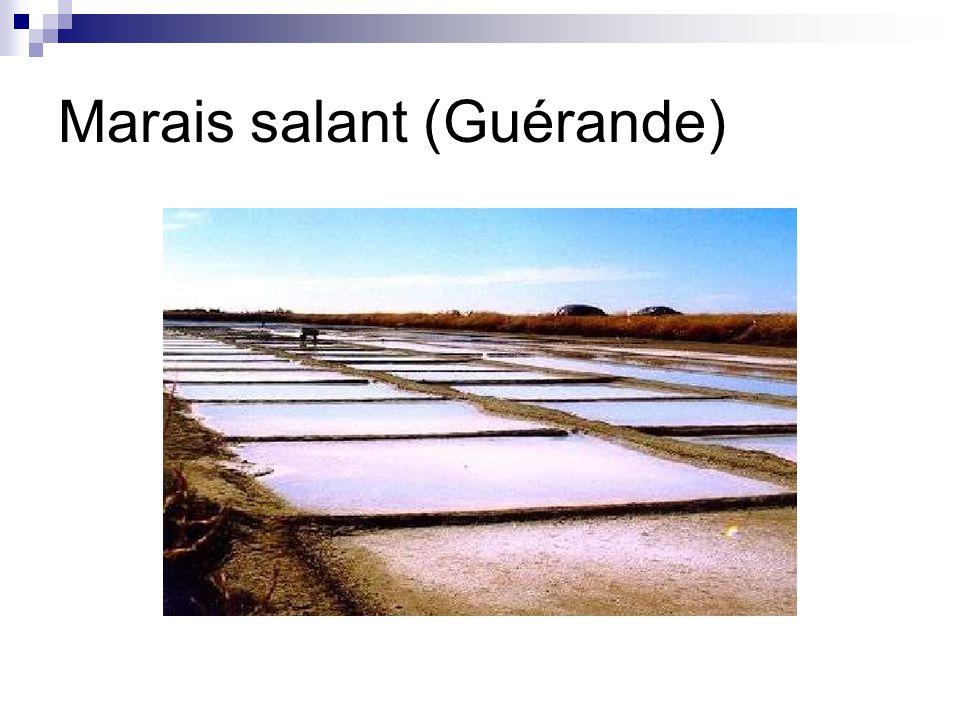 Marais salant (Guérande)