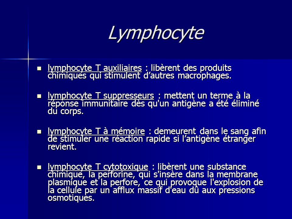 Lymphocyte lymphocyte T auxiliaires : libèrent des produits chimiques qui stimulent d'autres macrophages.