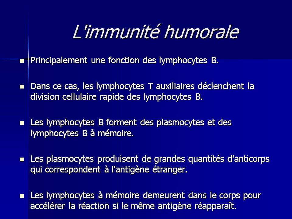L immunité humorale Principalement une fonction des lymphocytes B.