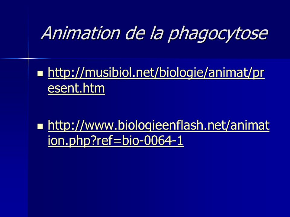 Animation de la phagocytose