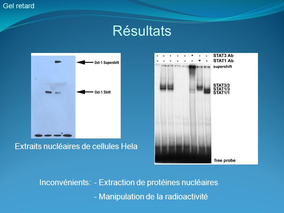 Résultats Extraits nucléaires de cellules Hela