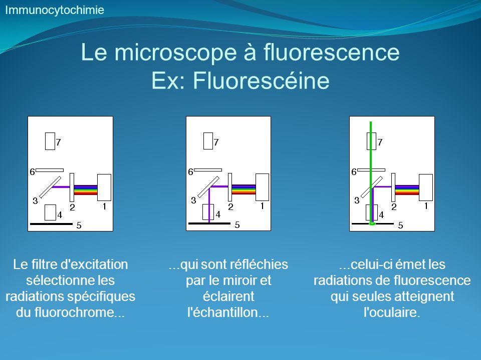 Le microscope à fluorescence Ex: Fluorescéine
