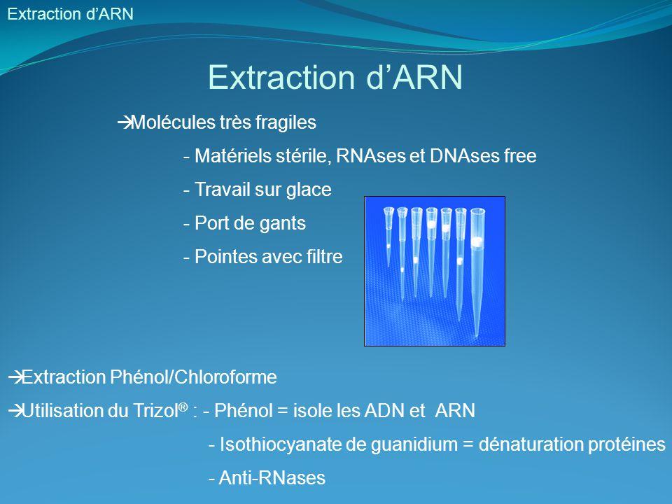 Extraction d'ARN Molécules très fragiles