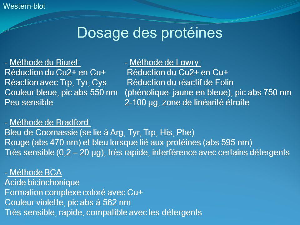Dosage des protéines - Méthode du Biuret: - Méthode de Lowry:
