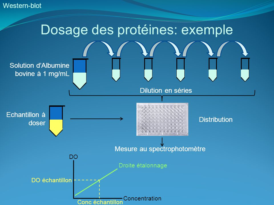 Dosage des protéines: exemple