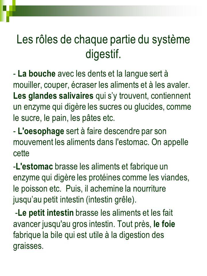 Les rôles de chaque partie du système digestif.
