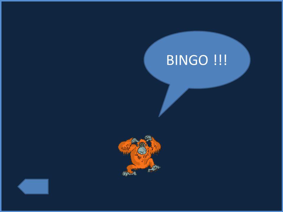 BINGO !!!