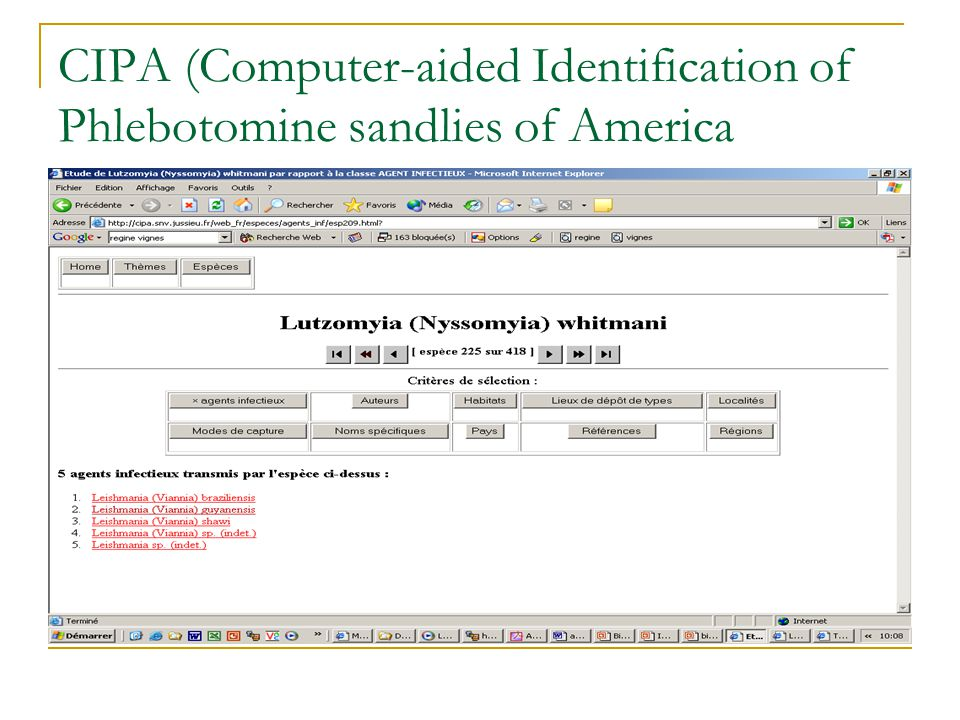 CIPA (Computer-aided Identification of Phlebotomine sandlies of America