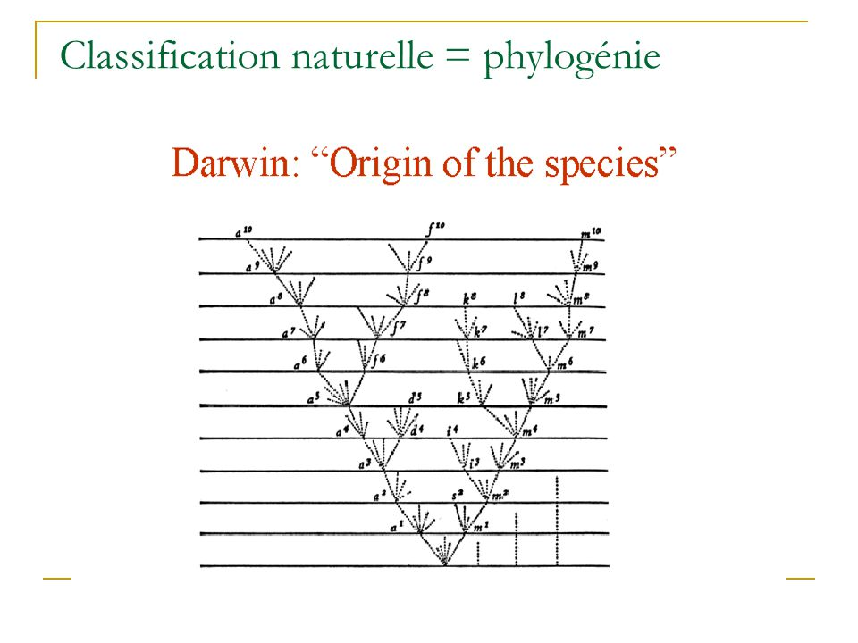 Classification naturelle = phylogénie