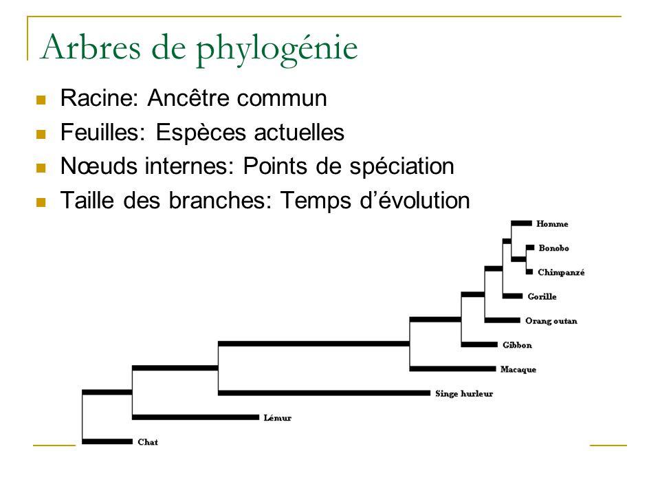 Arbres de phylogénie Racine: Ancêtre commun