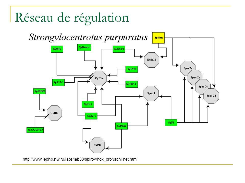 Réseau de régulation http://www.iephb.nw.ru/labs/lab38/spirov/hox_pro/urchi-net.html