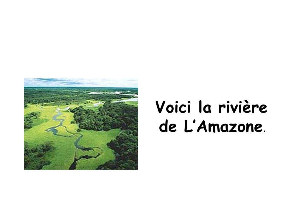 Voici la rivière de L'Amazone.