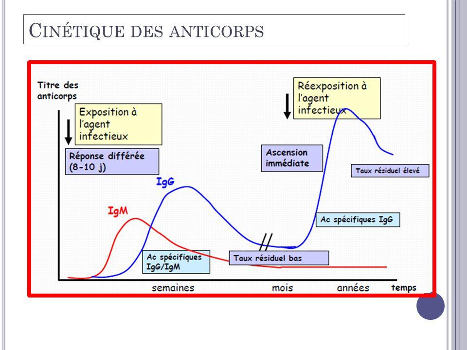 Cinétique des anticorps