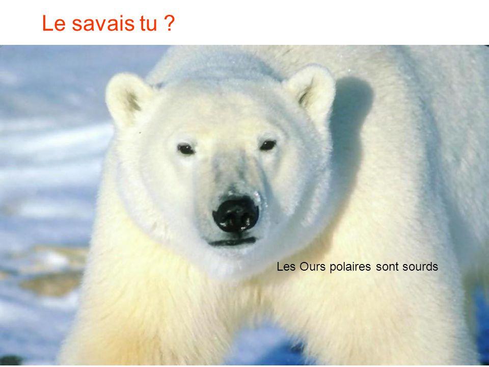 Le savais tu Les Ours polaires sont sourds