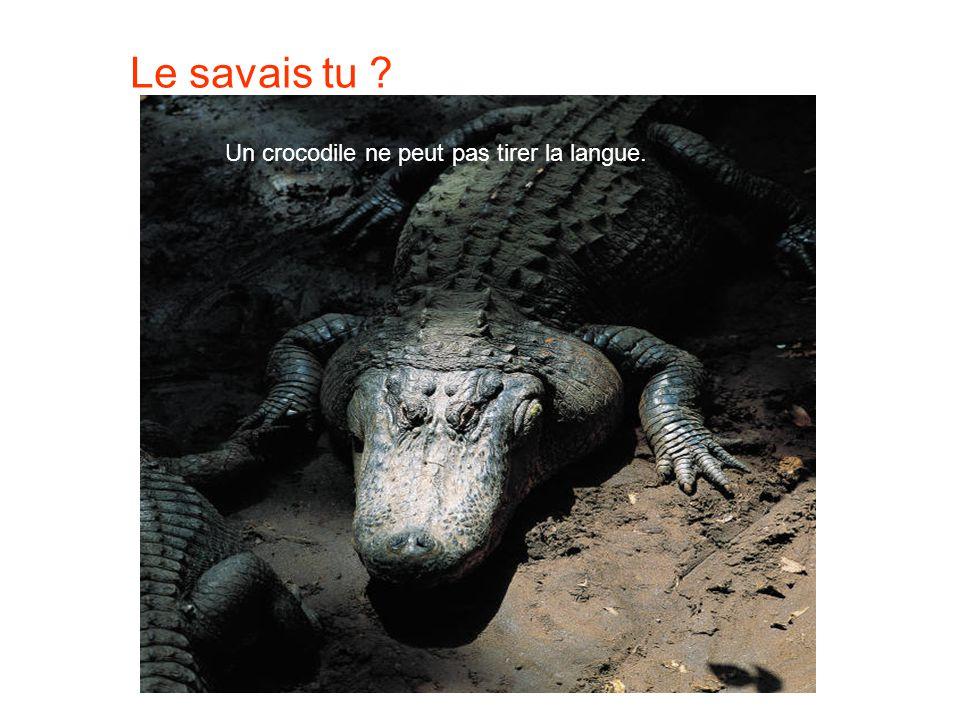 Le savais tu Un crocodile ne peut pas tirer la langue.