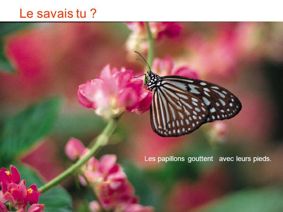 Le savais tu Les papillons gouttent avec leurs pieds.
